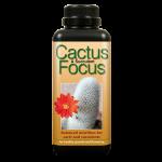Cactus focus